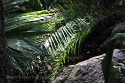 Arrosage dans la serre des plantes du jardin botanique de Copenhague