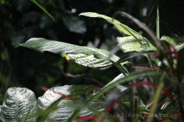 Arrosage dans la serre du jardin botanique de Copenhague
