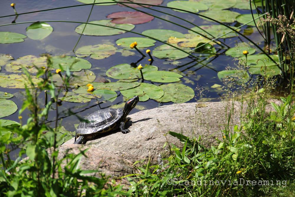 Tortue du jardin botanique de Copenhague