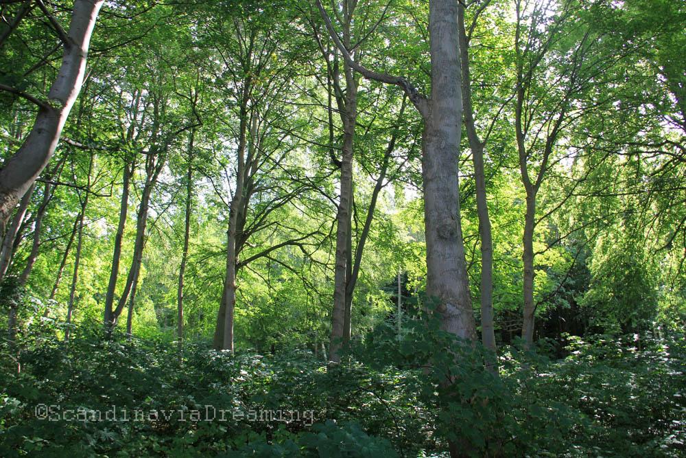 Dans la forêt artificielle d'Hornbaek