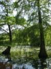 Mangrove de Cheverny