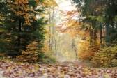 Dans les feuilles mortes