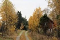 Les arbres jaunes