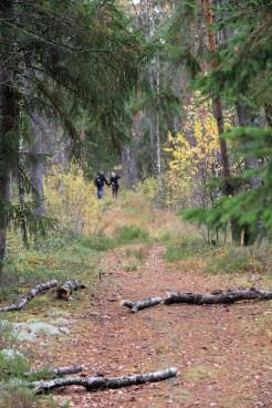 Un couple dans les bois