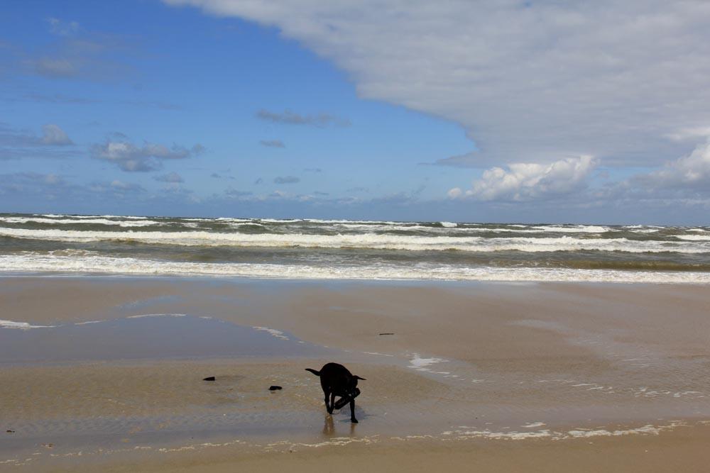 chien plage danemark