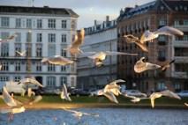 Lacs Copenhague