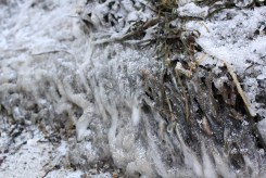 Algues glacées
