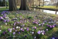 Fleurs parc