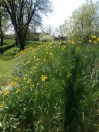 Fleurs cimetière Nylars