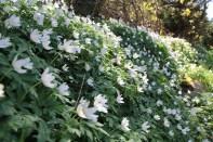 Fleurs Bornholm