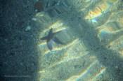 etoile-de-mer-suede