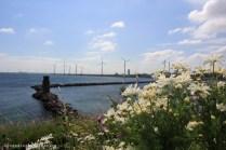 éoliennes de Copenhague