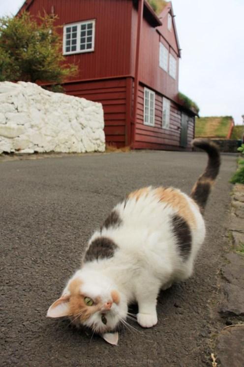 Chat Torshavn
