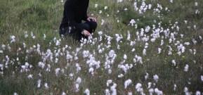 Fleurs Féoré 2