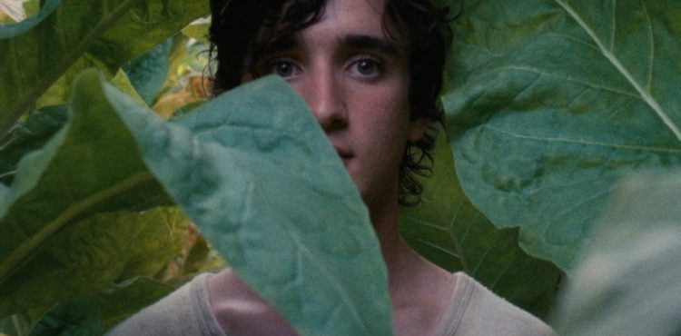 Lazzaro Felice (Happy as Lazarus)