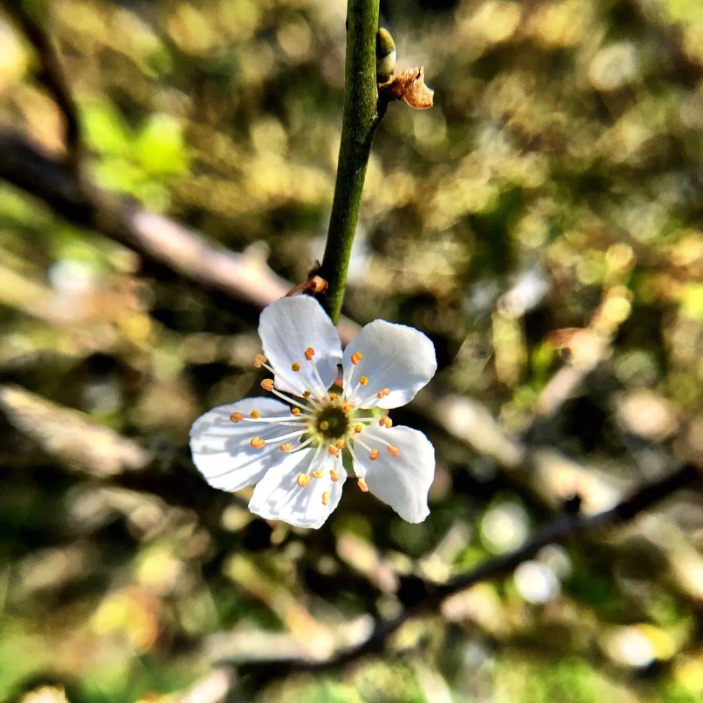 Close up of a white flower, the background blurred.