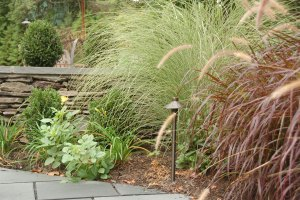 Landscaping - decorative grasses