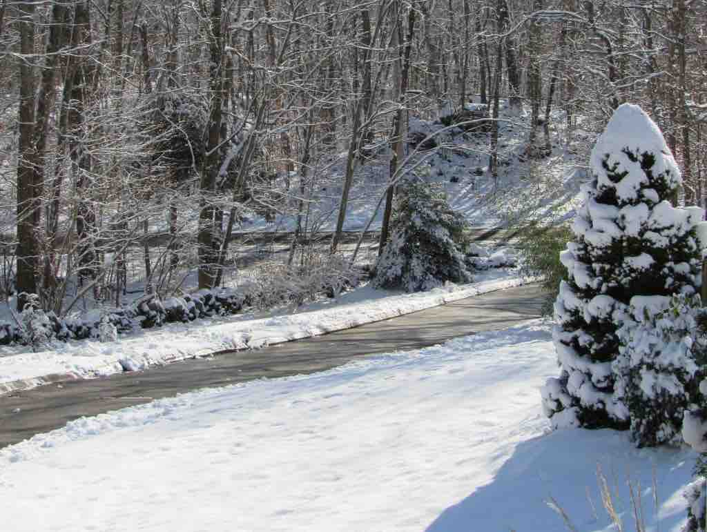 Scape-Abilities evergreen trees in winter