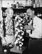 Linus Pauling and Robert Corey examining models of protein structure molecules. approx. 1951.