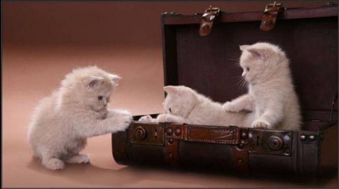 kittyvacation