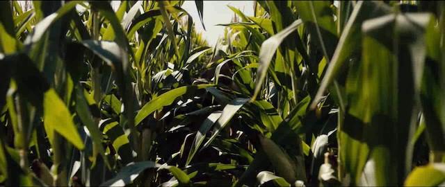 sc-corn