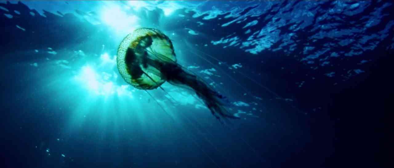 sf-jellyfish