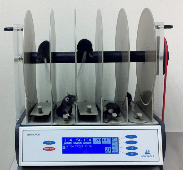 five laboratory mice on a rotarod device to test their balance