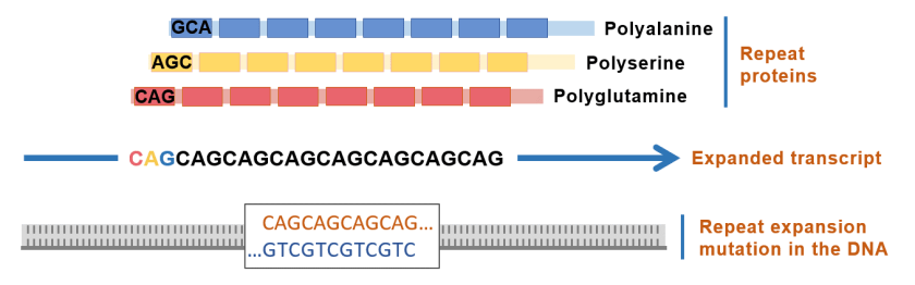"Diagram show how different DNA sequences can be ""read"" and translated as different proteins"