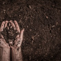 World Soil Day – 5 December