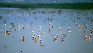 Parque Natural del Hondo