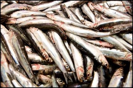CS - Mercado Central - Pescado