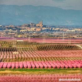 Lleida-SCB-ARBRES-FLORITS_2019