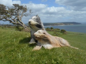 Ollie and Angus in the Breeze