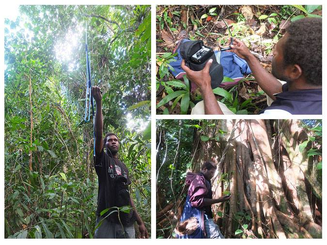Lamaris conducting fieldwork into the home range of Admiralty Cuscus. Photo: WCS PNG