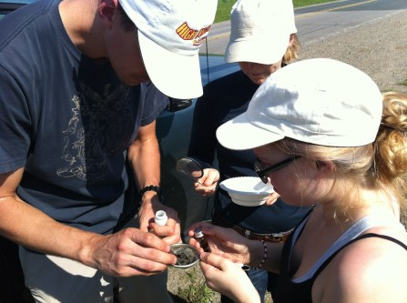 Collecting freshly caught pan-trapped specimens, field season 2013