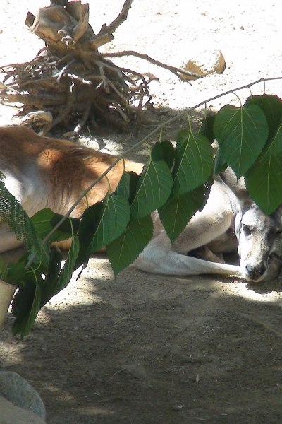 A walk on the wildside – Los Angeles Zoo