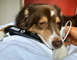SCENAR therapy for dogs