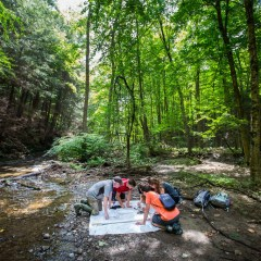 Video: Research in the Woods
