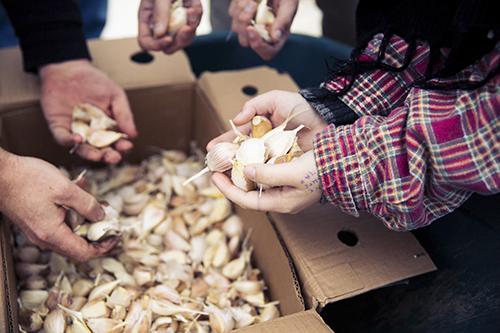 17 Big Idea Garlic 7D0A0030 KEITH WALTERS copy-web