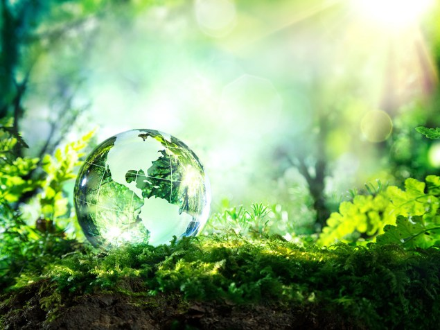 a photo of globe in a forest