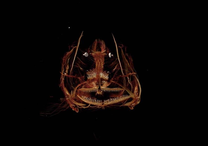 snailfish.ctscan.web.1