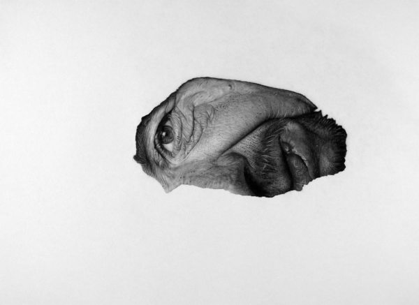 Realistic Art Pencil Drawing