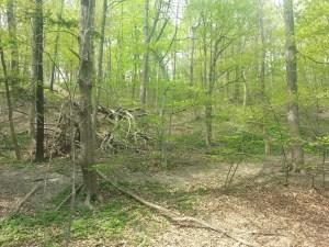 12. Park Drive Reservation Trail