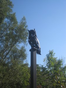 Charles Sauriol Conservation Area Owl