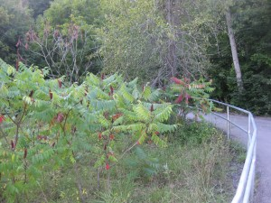 East Don Trail (3)