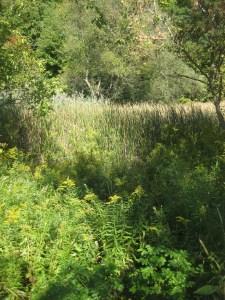 East Don Trail wetland
