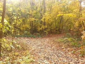 L'Amoreaux North Park Passmore Forest 2