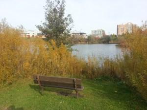 L'Amoreaux North Park Pond