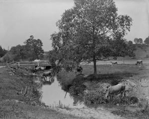 Dentonia Park Farm Library Archives (1)