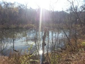Massey Creek Trail (7)